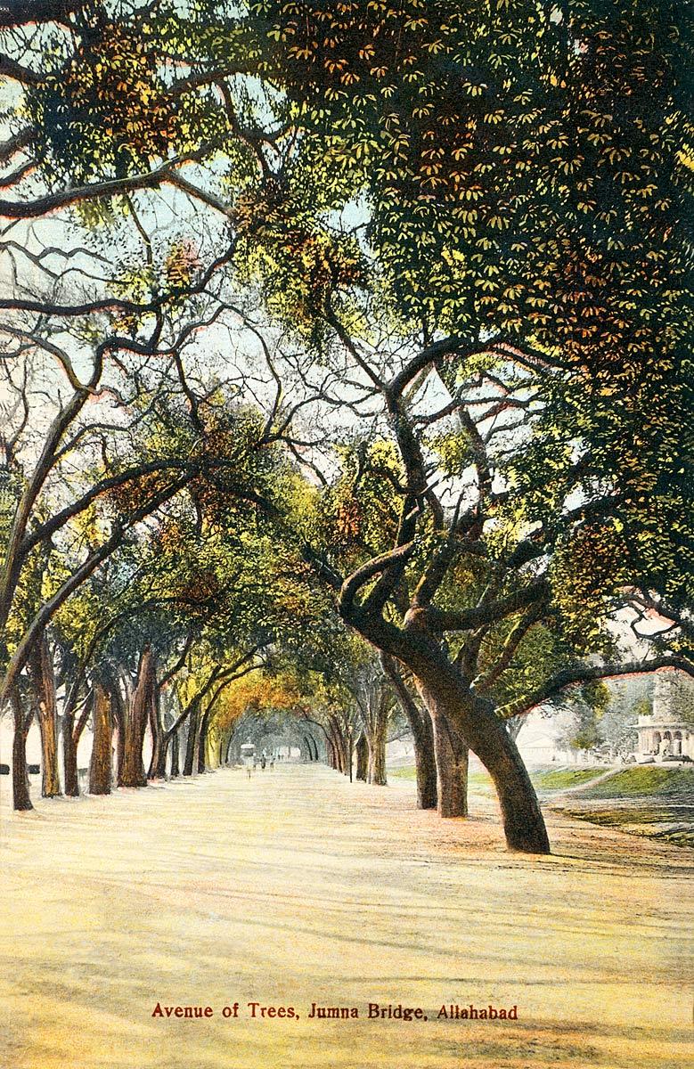 Avenue of Trees, Jumna Bridge, Allahabad.