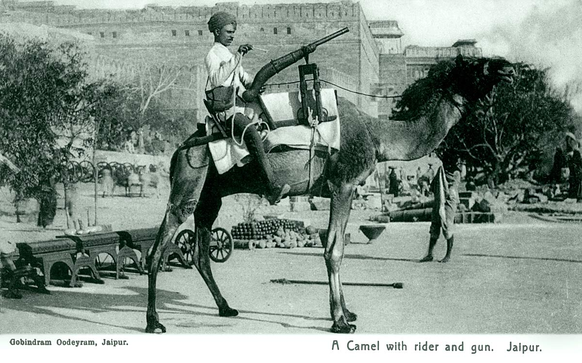 A Camel with rider and gun. Jaipur