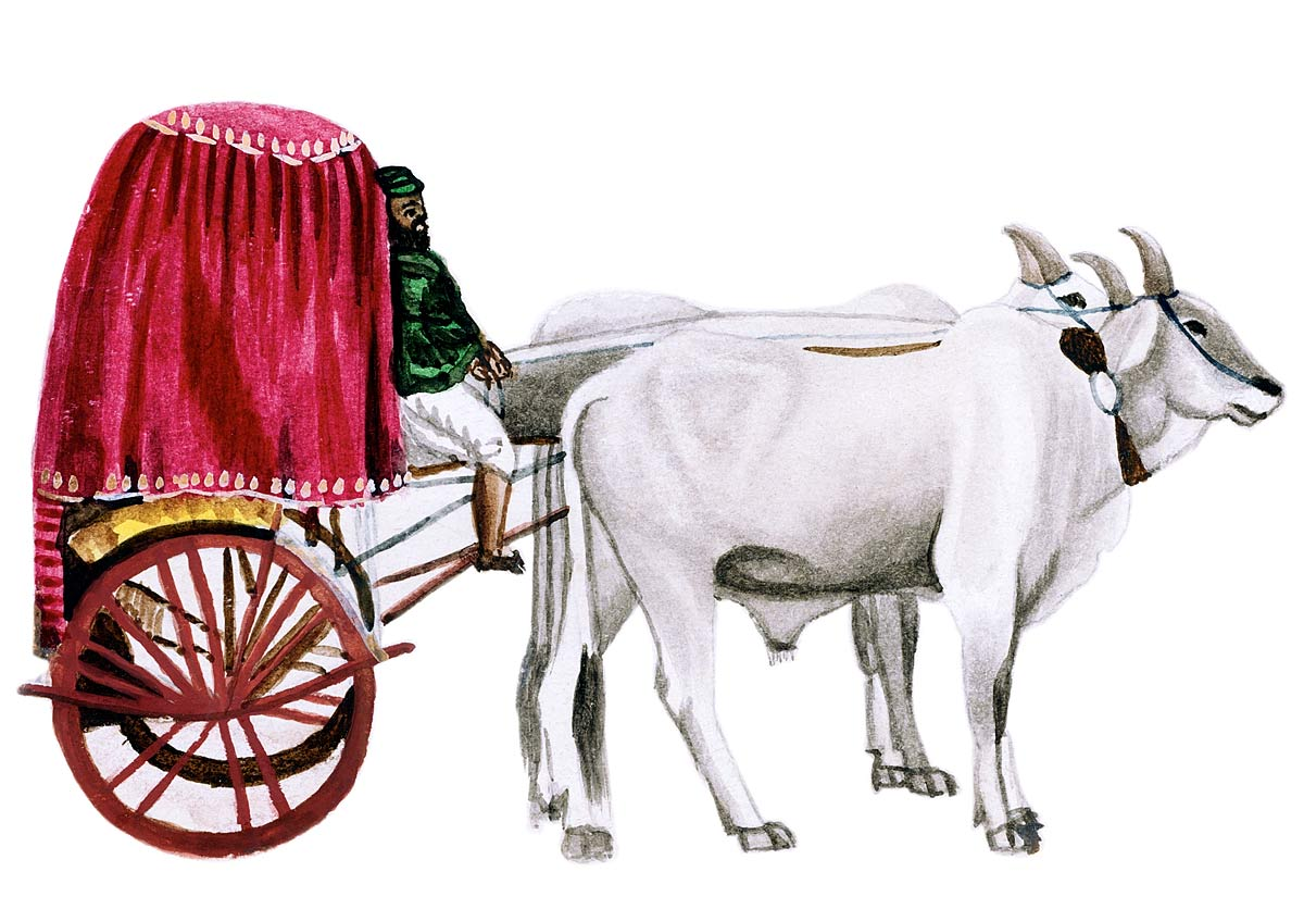[Zenana Carriage]