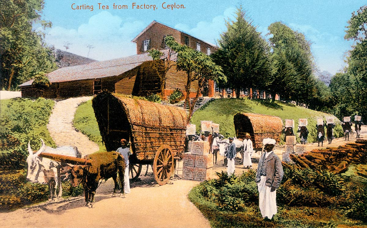 Carting Tea from Factory, Ceylon