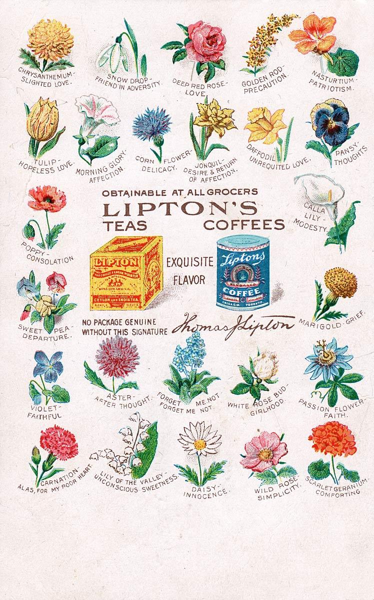 Lipton's Teas and Coffees