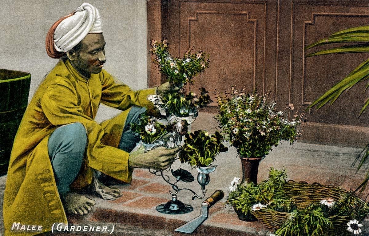Malee. (Gardener.)