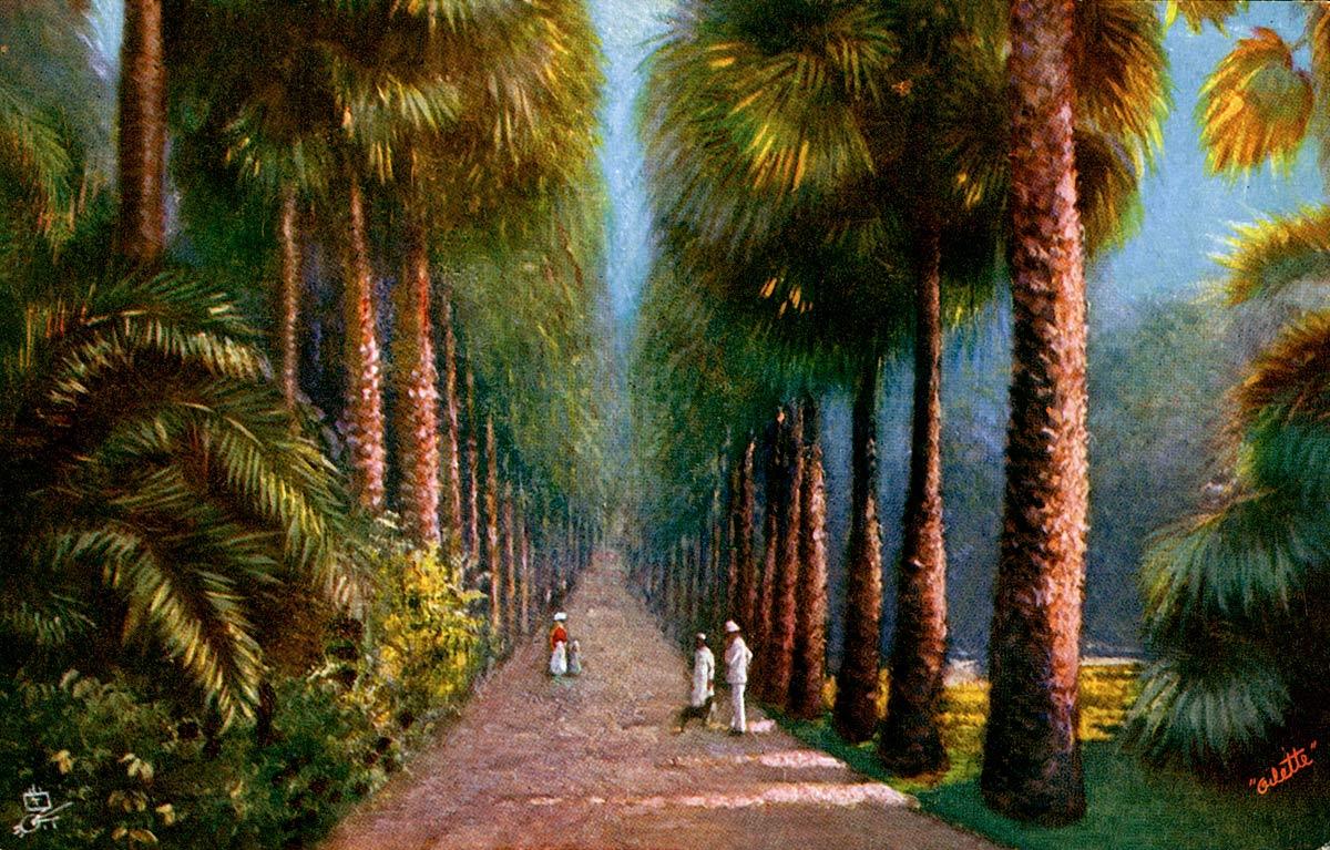 Palm Avenue, Botanical Gardens, Calcutta.
