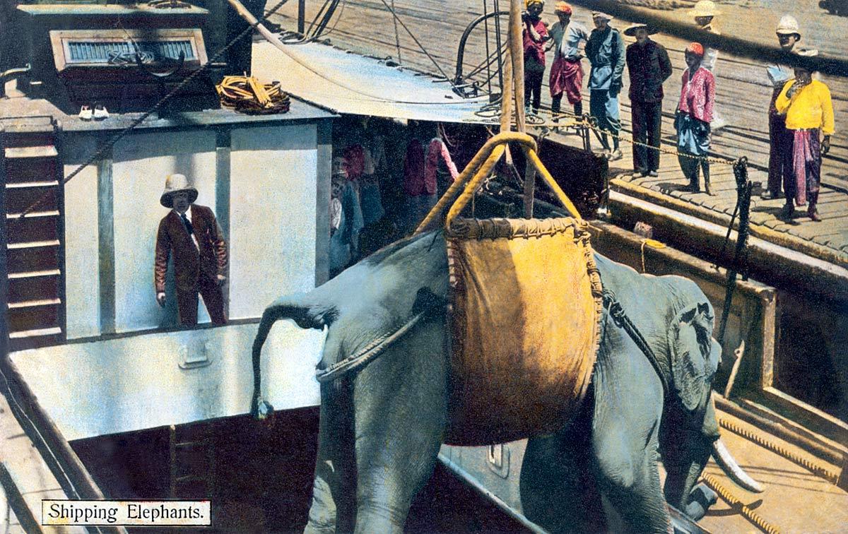 Shipping Elephants