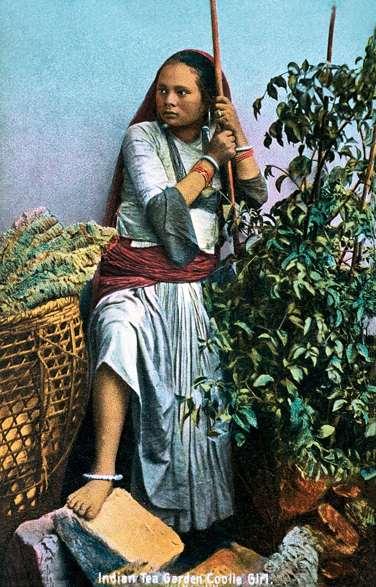 Indian Tea Garden Coolie Girl