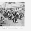 A Group of the Maharaja's Elephants