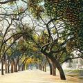 Avenue of Trees, Jumna Bridge, Allahabad.