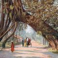 Ceylon Banyan Tree Arch, Near Colombo
