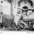 Bullock Cart (Sagar). Jaipur.