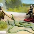 Burmese Snake Charmers