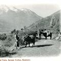 Ladhakis and Yaks, Scinde Valley, Kashmir
