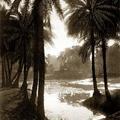 Palms, Chepauk, Madras